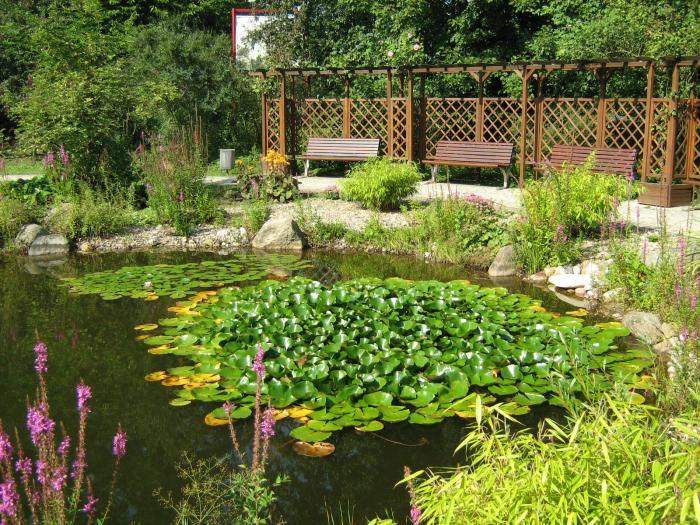 Teichanlagen gartenteich koi teich schwimmteich weyhausen for Fische im schwimmteich