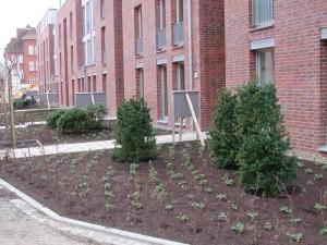 Bepflanzung Außenanlage