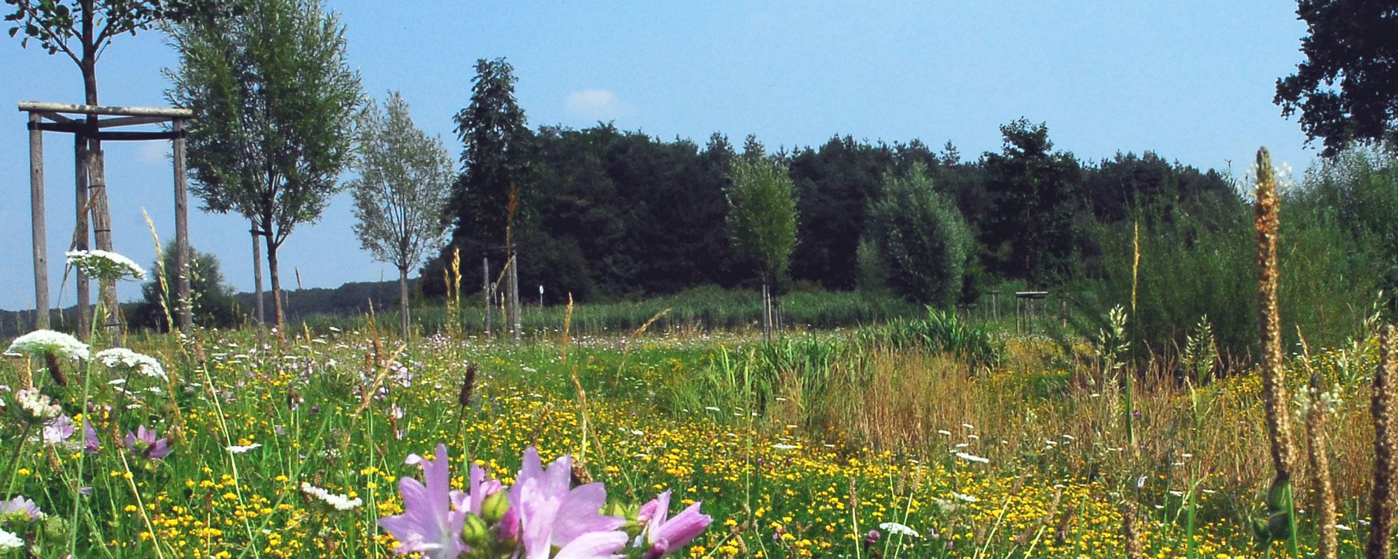 landschaftsbau tiefbau baumpflege gifhorn wolfsburg. Black Bedroom Furniture Sets. Home Design Ideas